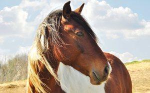 Animal_horse_426181